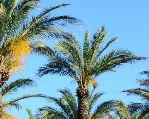 Montfort Oakville Mediterranean Cuisine - palm trees
